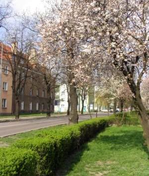 http://www.bursa-schronisko.pl/wp-content/uploads/2013/08/54-300x353.jpg